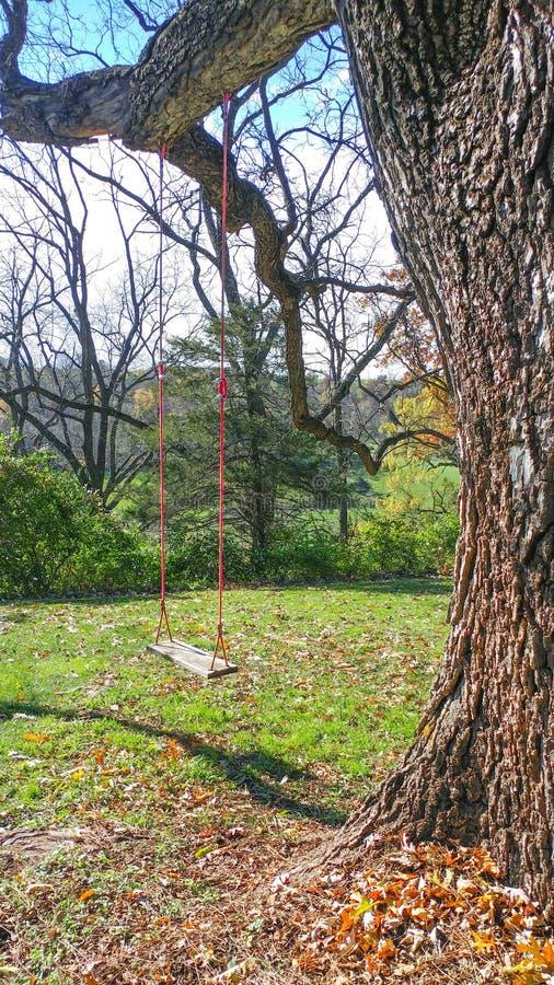 在大橡树的室外树摇摆 库存图片