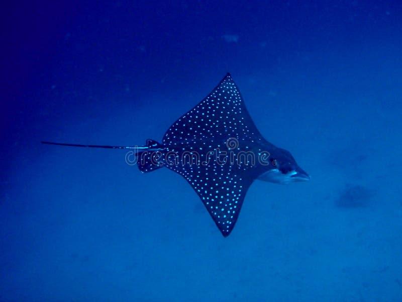 在大海的刺激光线 免版税库存照片