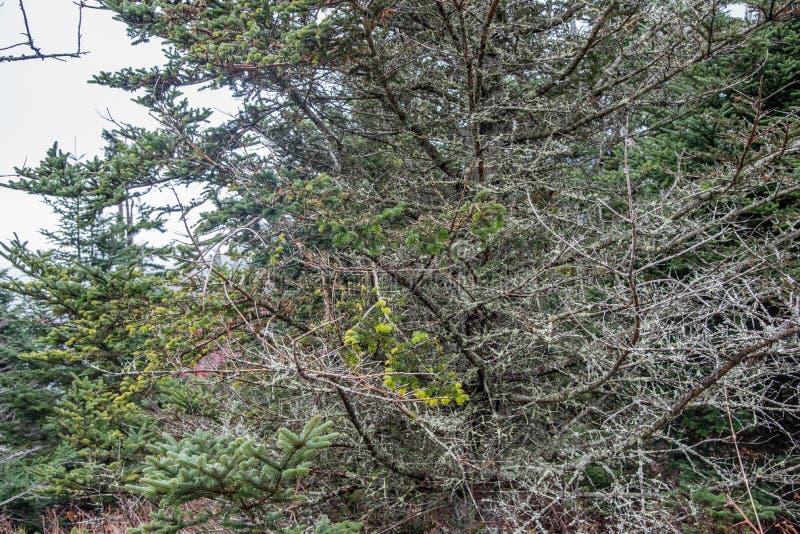 在大烟山国家公园的晚秋天 免版税库存照片