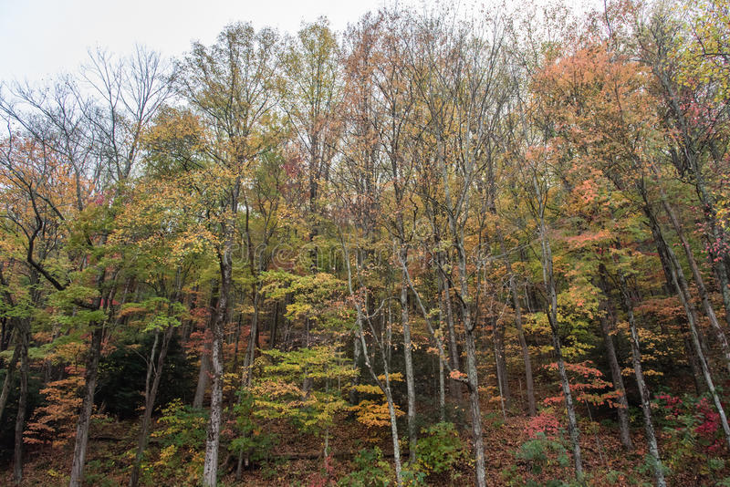在大烟山国家公园的秋天 免版税库存照片