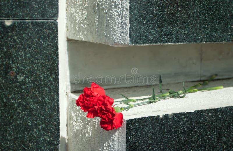 在大理石的康乃馨 免版税库存图片