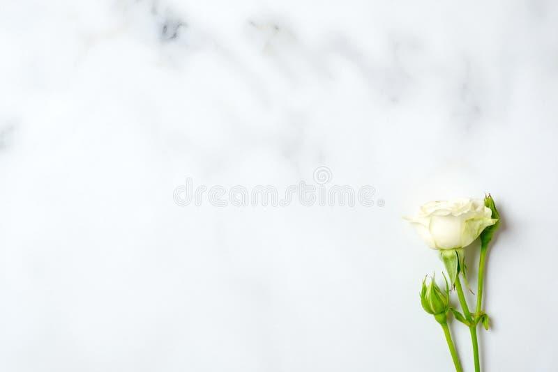 在大理石背景的白色玫瑰色花 顶视图,平的被放置的构成,在头顶上 嫩妇女书桌 库存图片