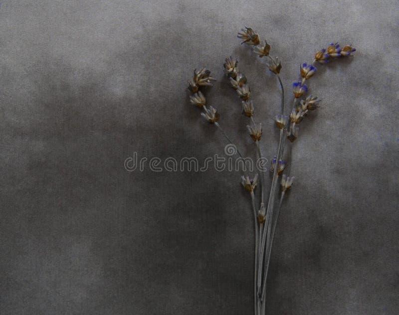 在大理石-最深刻的同情的干淡紫色 免版税图库摄影