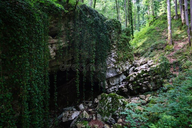 在大石头的神奇洞入口与藤本植物在森林里 库存图片