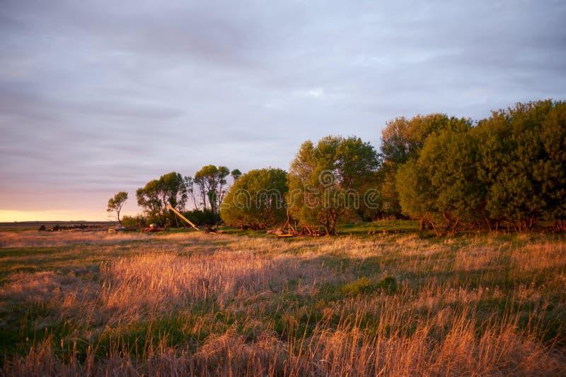 在大绿色树旁边打开草原 库存照片