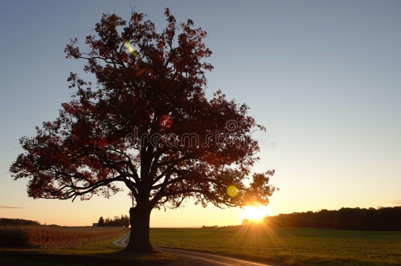 在大老橡树后剪影的日出沿绞的驱动的在一个农场在秋天 库存图片