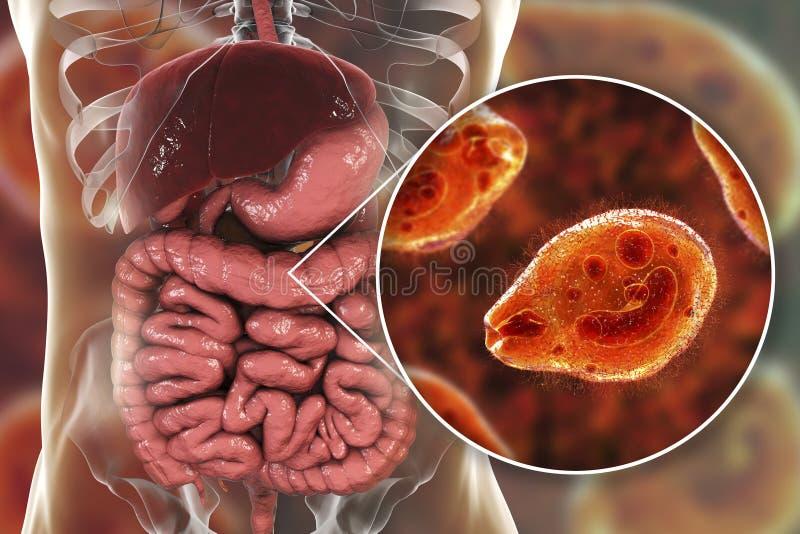 在大肠的Balantidium杆菌原生动物 向量例证