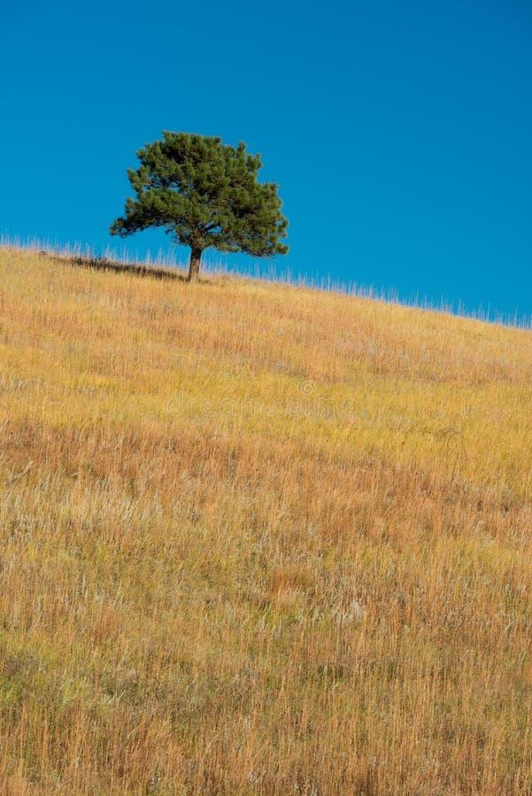 在大草原的孤立树 免版税库存图片