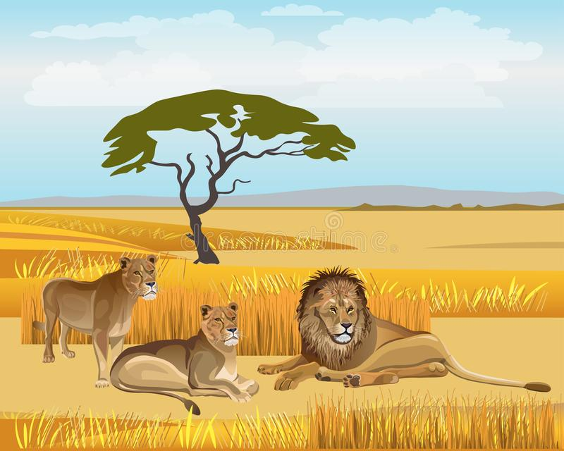 在大草原的自豪感狮子 向量例证