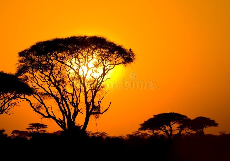 在大草原的非洲日落 免版税库存图片