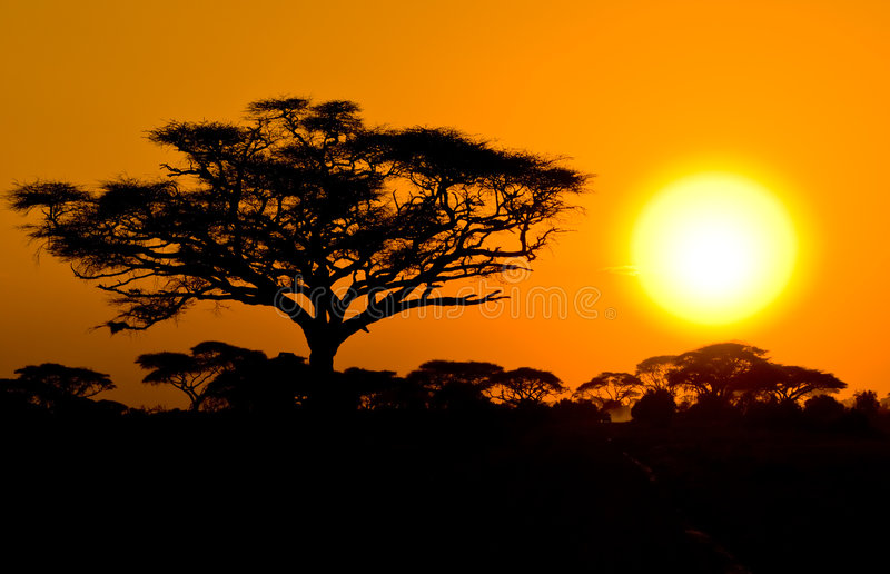 在大草原的非洲日落 库存图片