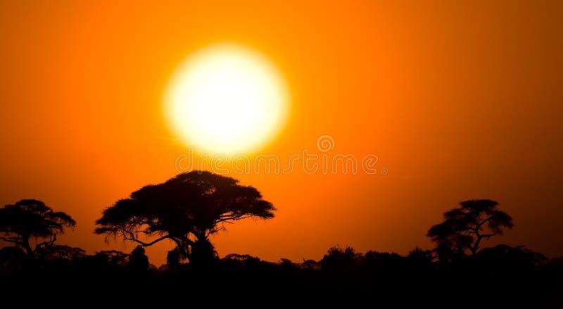 在大草原的非洲日落 免版税库存照片