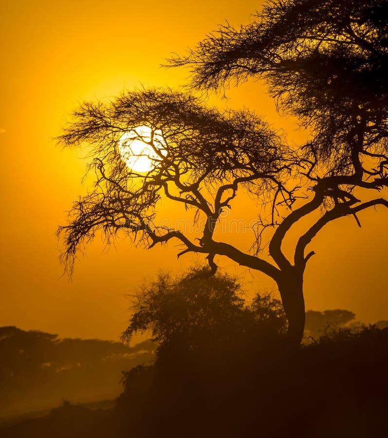 在大草原的非洲日落 免版税图库摄影