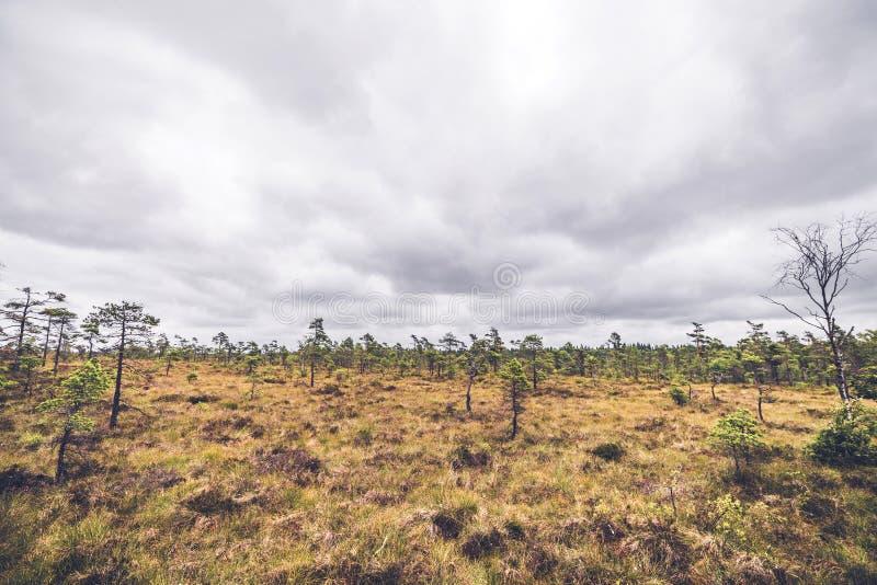 在大草原风景的小松树 图库摄影