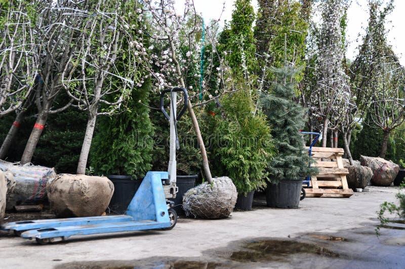 在大袋子的苹果计算机幼木在庭院销售 种植的果树在地面 免版税库存图片