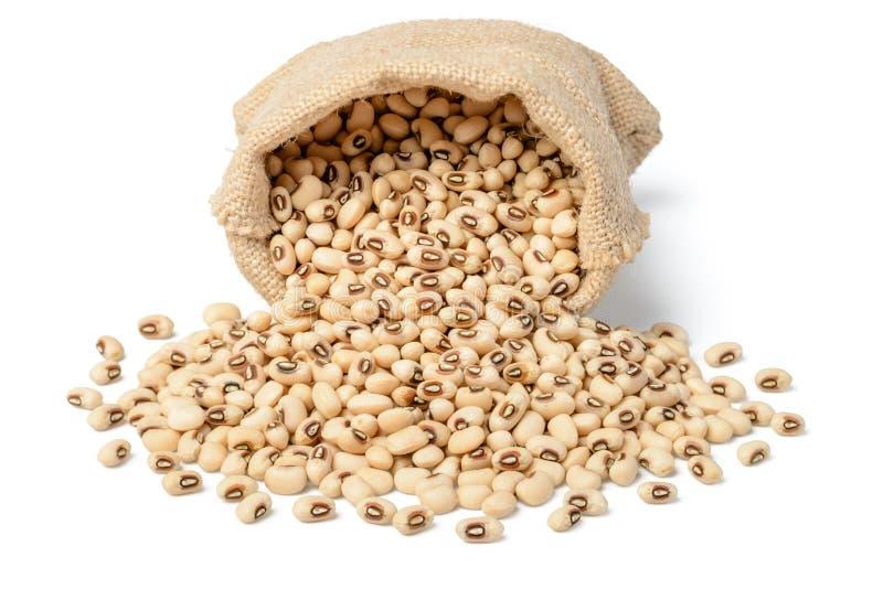 在大袋的未加工的母牛豌豆豆 免版税库存图片