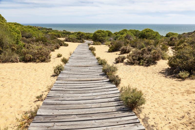 在大西洋海岸的木供徒步旅行的小道在西班牙 免版税库存照片