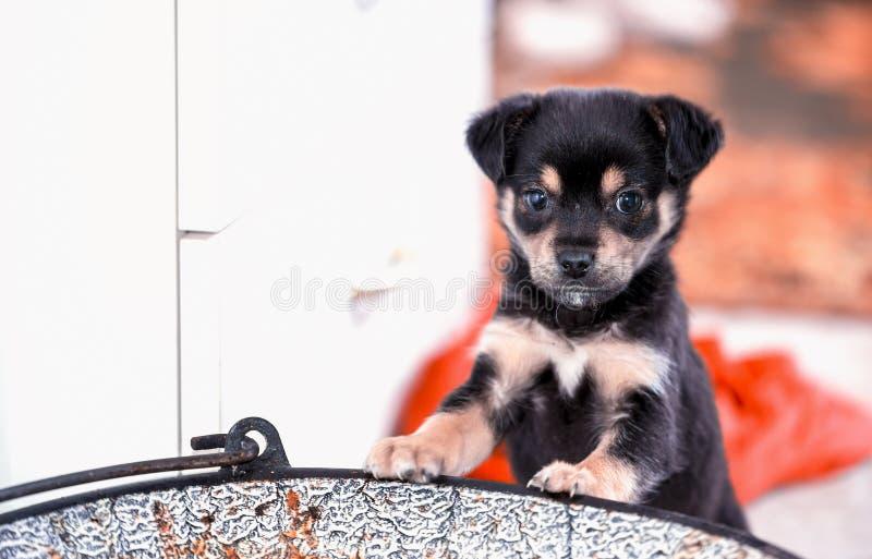 在大锅的逗人喜爱的棕色混合小狗 接近的纵向 库存照片