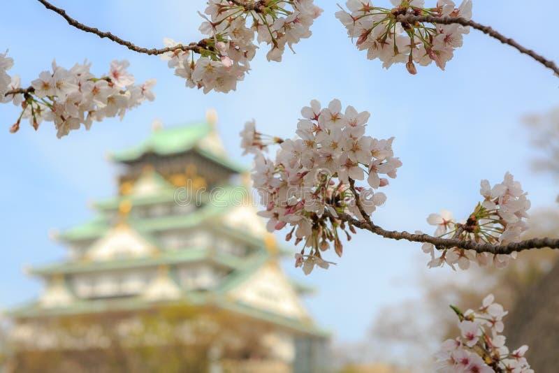 在大阪城堡,大阪,日本的樱花 免版税库存图片