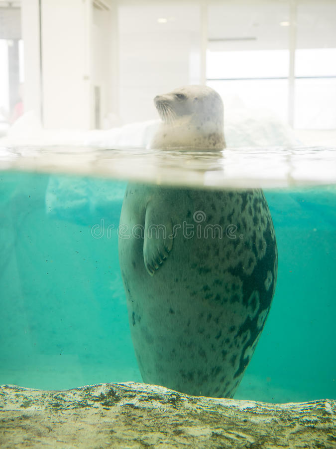 在大阪水族馆Kaiyukan (火光环的海狮水族馆) 库存照片