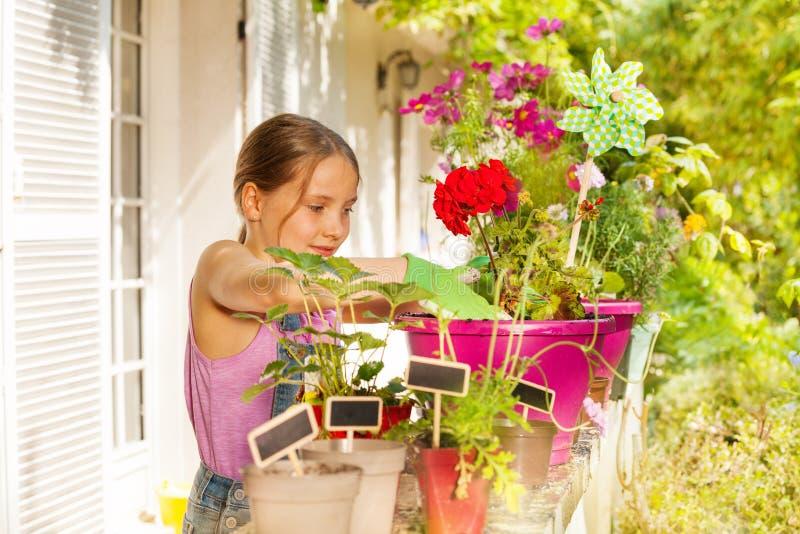 在大阳台的美丽的白肤金发的女孩装壶大竺葵 免版税库存图片