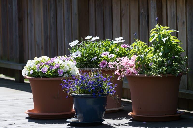 在大阳台的花盆 图库摄影