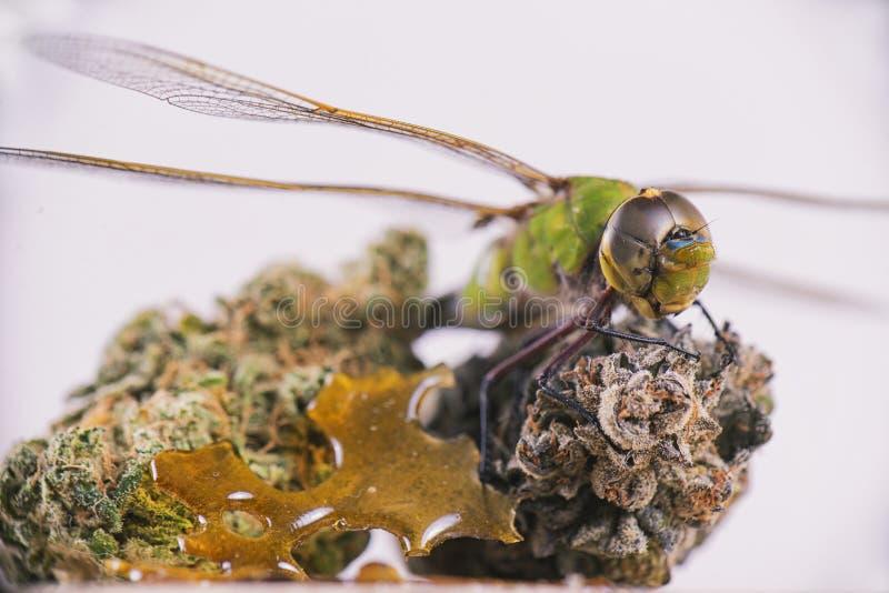 在大麻芽的蜻蜓和粉碎被隔绝在白色 免版税库存照片
