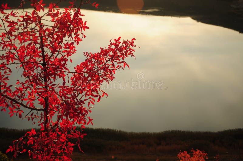 在天早期的光的秋叶  免版税库存照片
