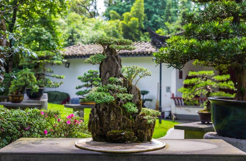 在天期间,美丽的盆景树在日本庭院里 免版税库存照片
