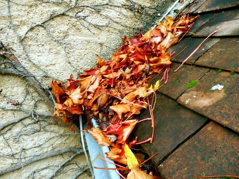 在天沟的叶子 免版税图库摄影