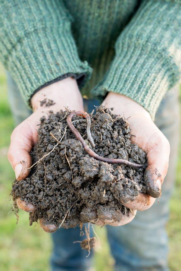在天然肥料堆的蚯蚓在手上的 库存图片