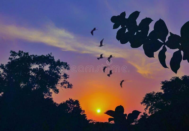 在天空的一个美好的日出视图与美好的颜色和鸟 皇族释放例证