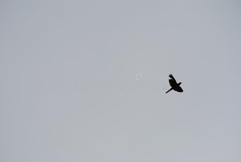 在天空的一次鸟飞行 免版税库存照片