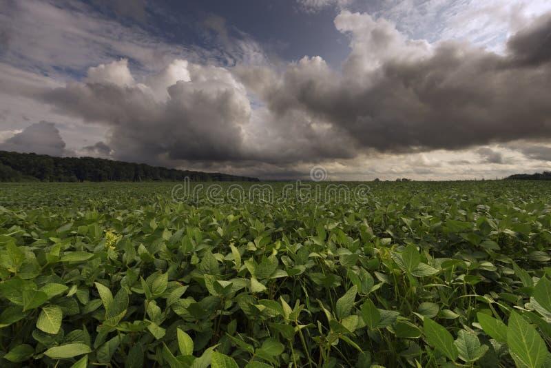 Download 在天空的云彩在草甸 库存照片. 图片 包括有 背包, 单作, 生长, 问题的, 农田, 生气勃勃, 云彩 - 72362274