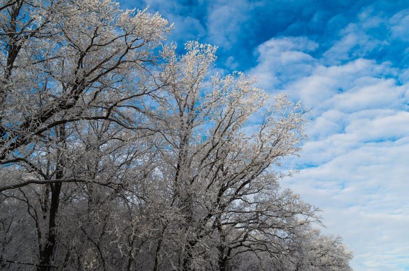 在天空的冬天树 库存图片