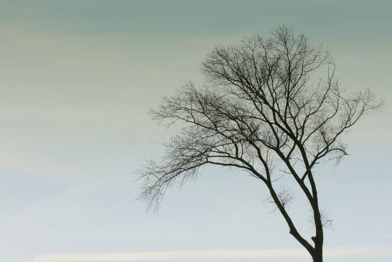 在天空的唯一树梢 图库摄影