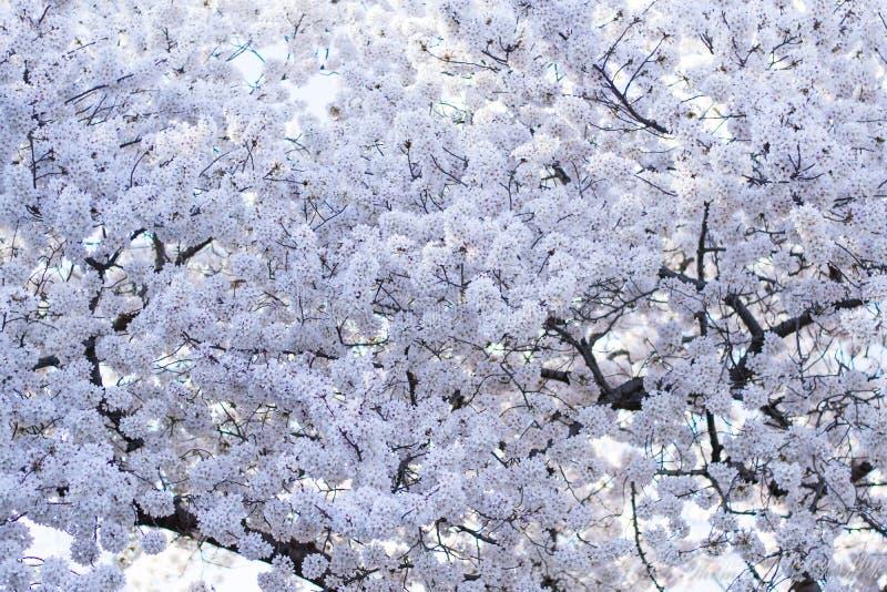 在天空的树枝 免版税图库摄影