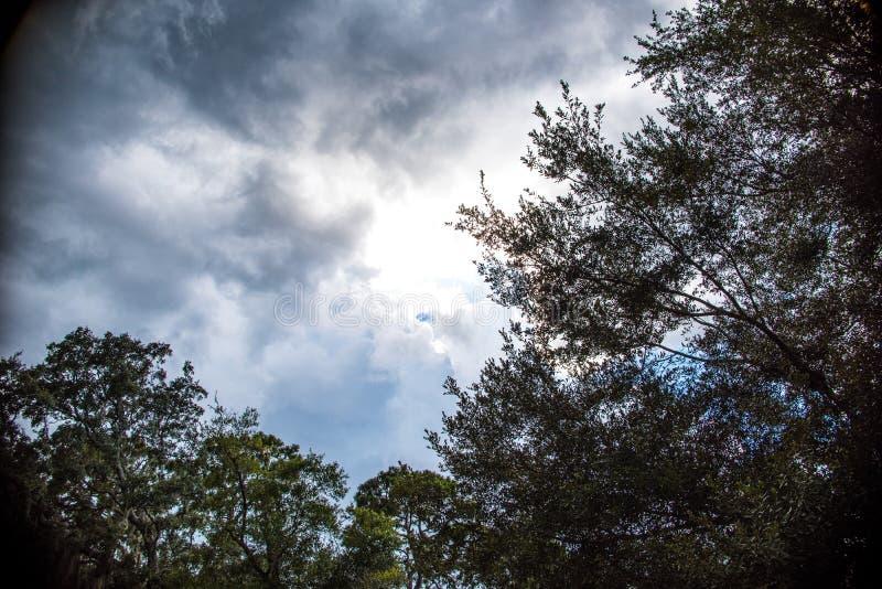 在天空的树枝 免版税库存照片