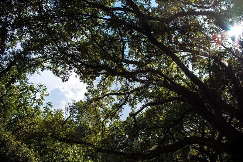 在天空的树枝 库存照片