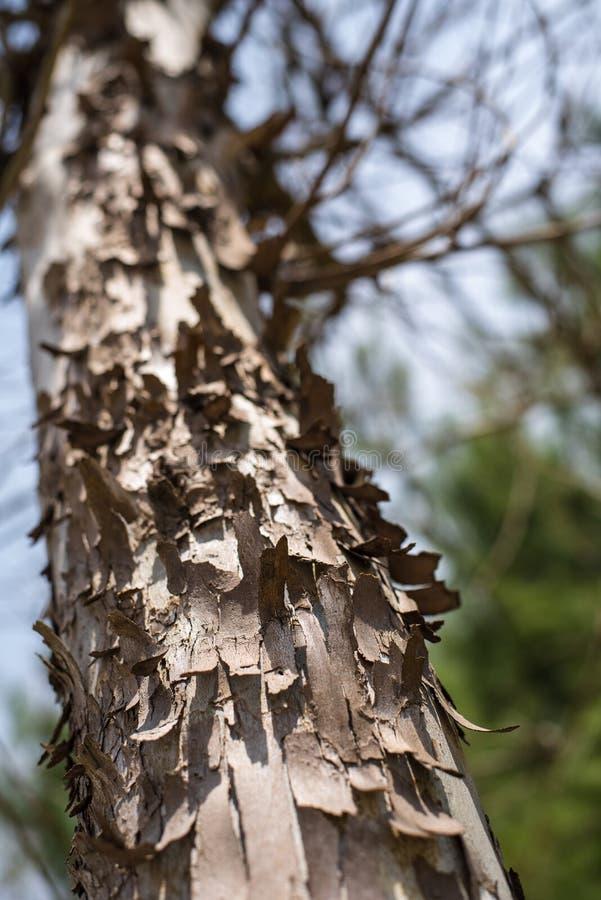 在天空的树枝 免版税库存图片