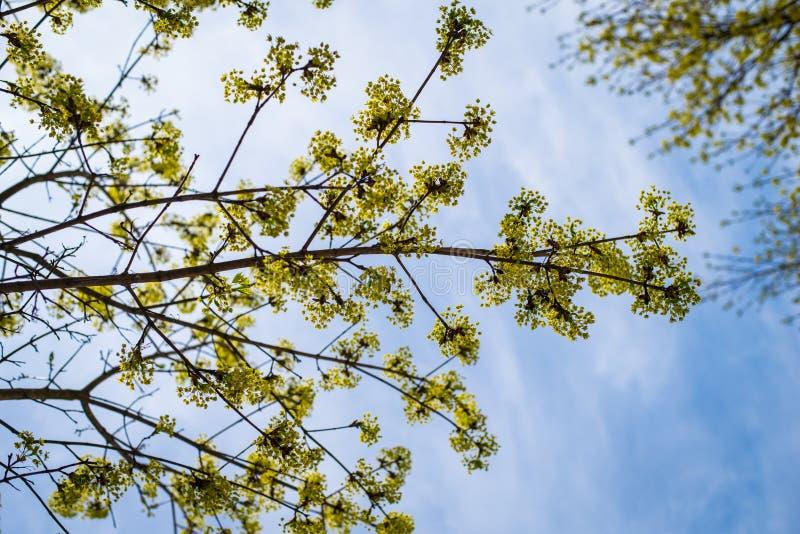 在天空的树枝 库存图片
