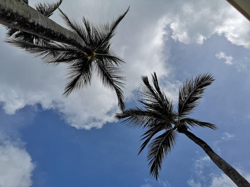 在天空的棕榈树 免版税库存图片