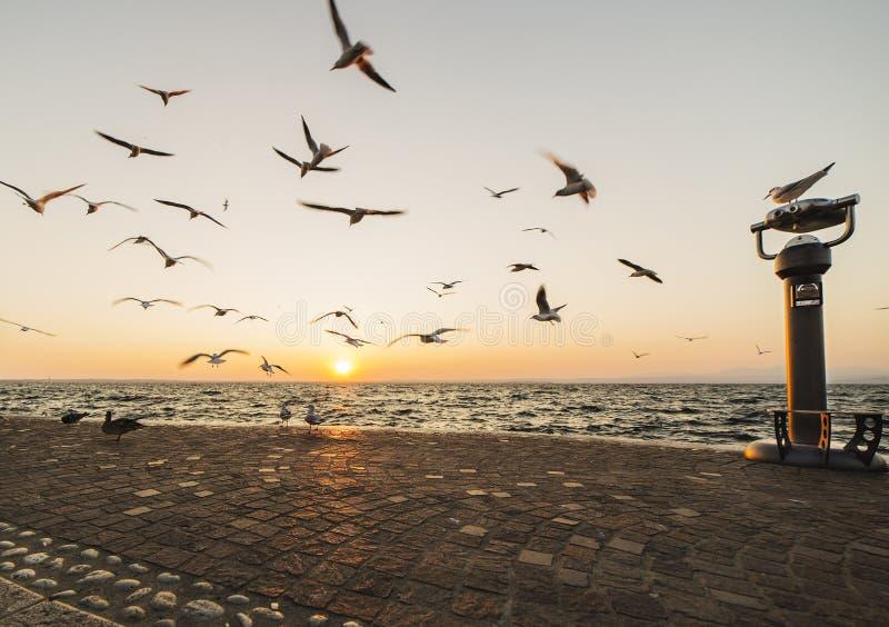 在天空的海鸥飞行在湖garda 免版税图库摄影