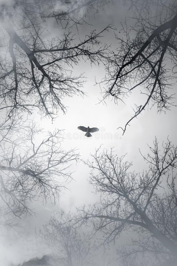 在天空的猎鹰飞行在多云森林 免版税库存图片