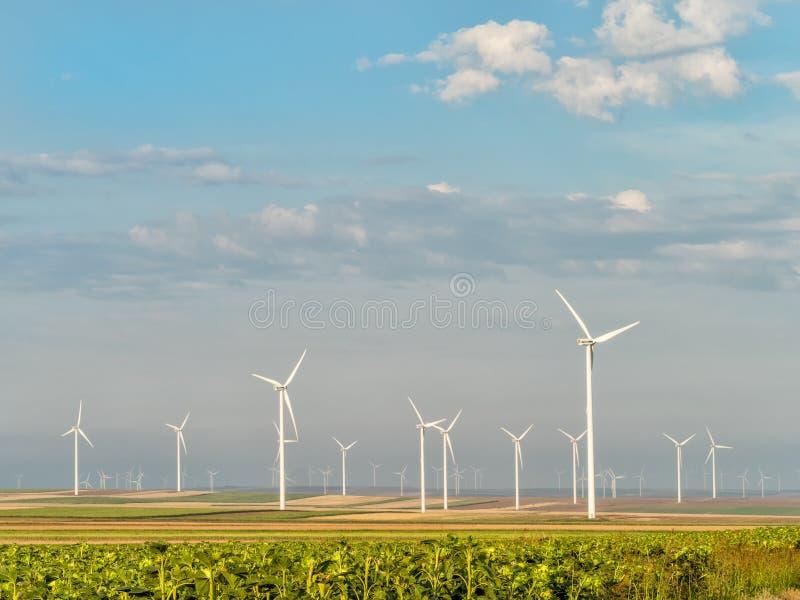 在天空的白色云彩在一块绿色太阳花田和风轮机 图库摄影