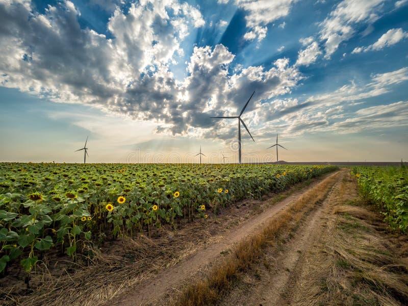 在天空的白色云彩在一块绿色太阳花田和风轮机 库存照片