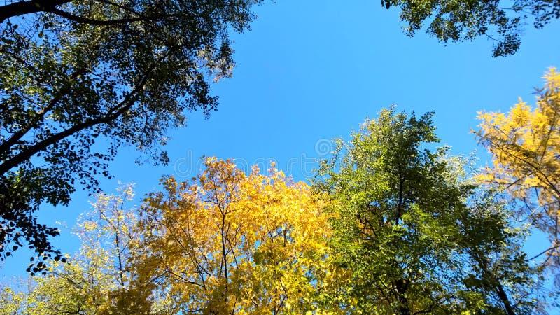 在天空的秋天 免版税库存图片