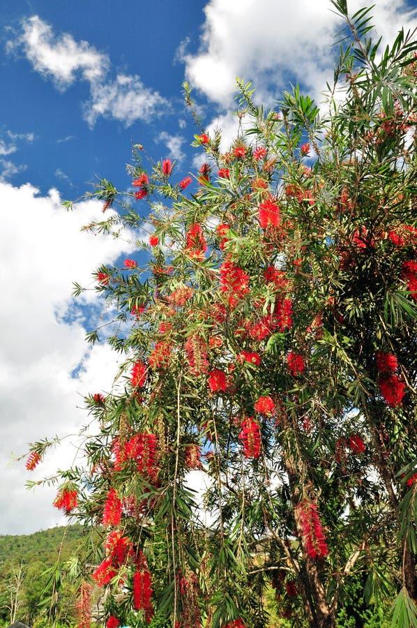 在天空的红色花秋天 免版税库存图片