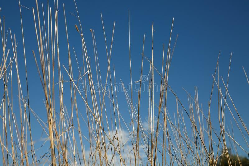 在天空的蓝色干草 免版税库存图片