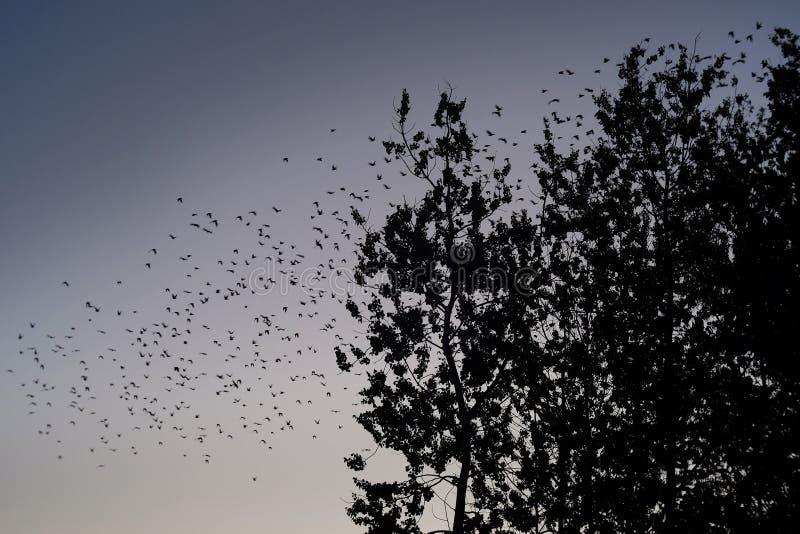 在天空的许多鸟 库存图片